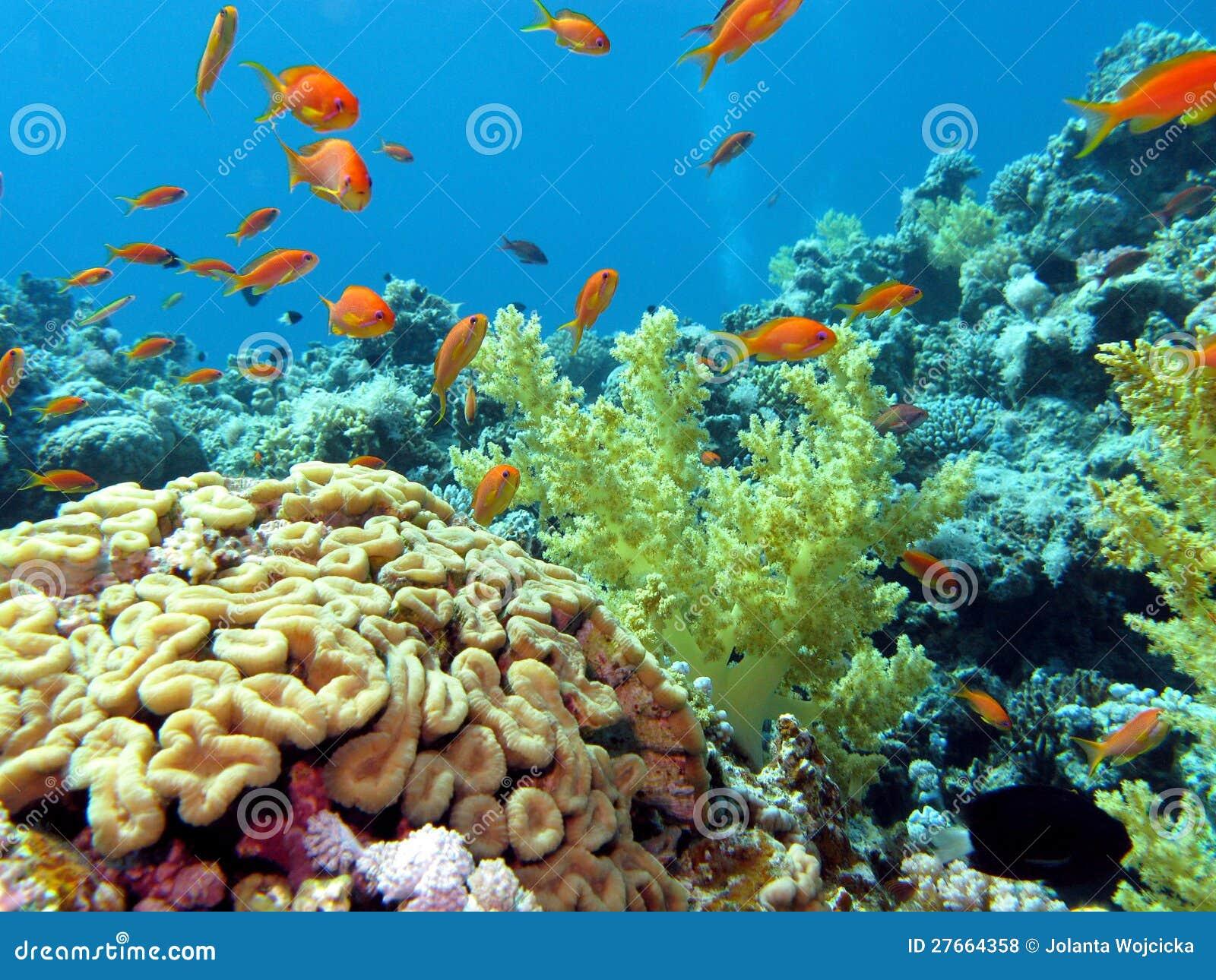 Korallenriff mit Gehirn und weiche Korallen auf dem botto