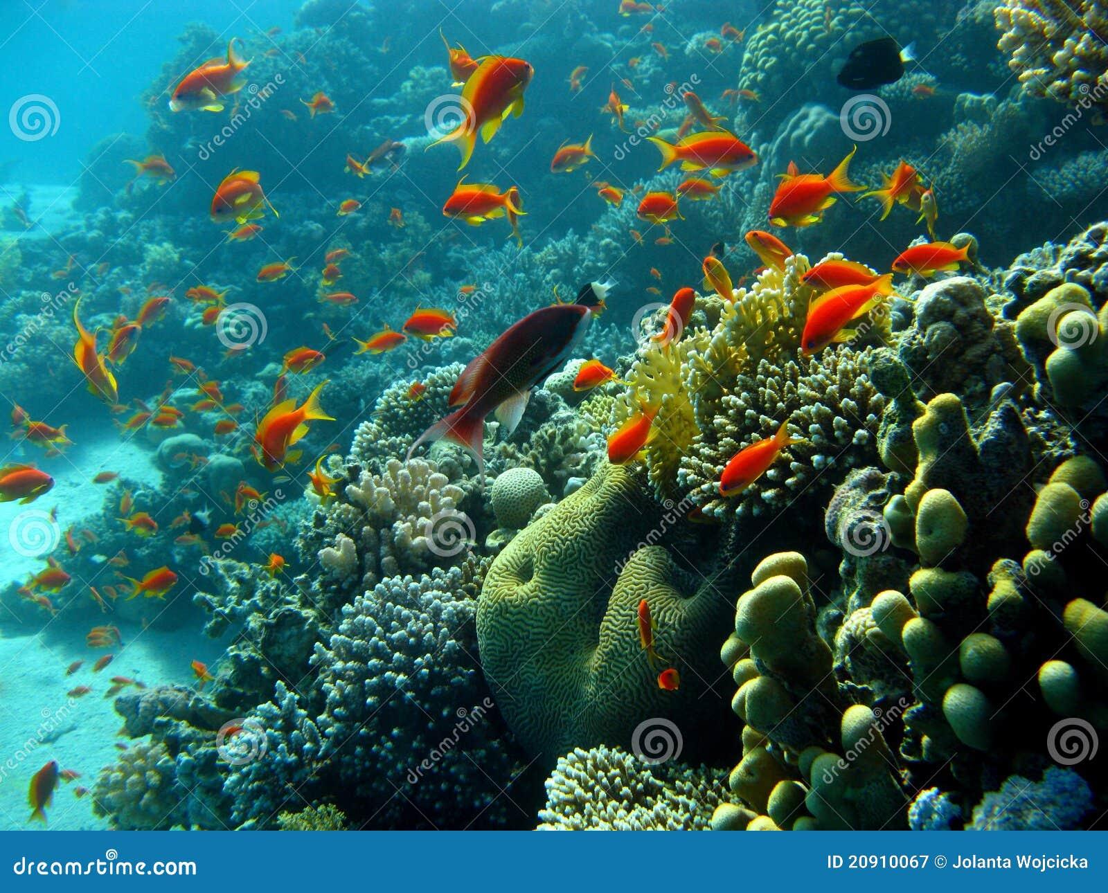 Korallenriff mit orange fischen stockbild bild 20910067 for Teichreinigung mit fischen