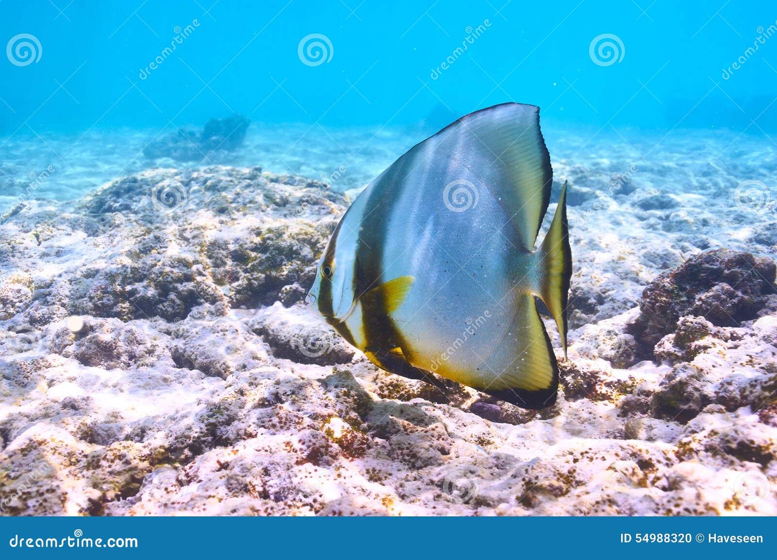 Korallenriff und Fische