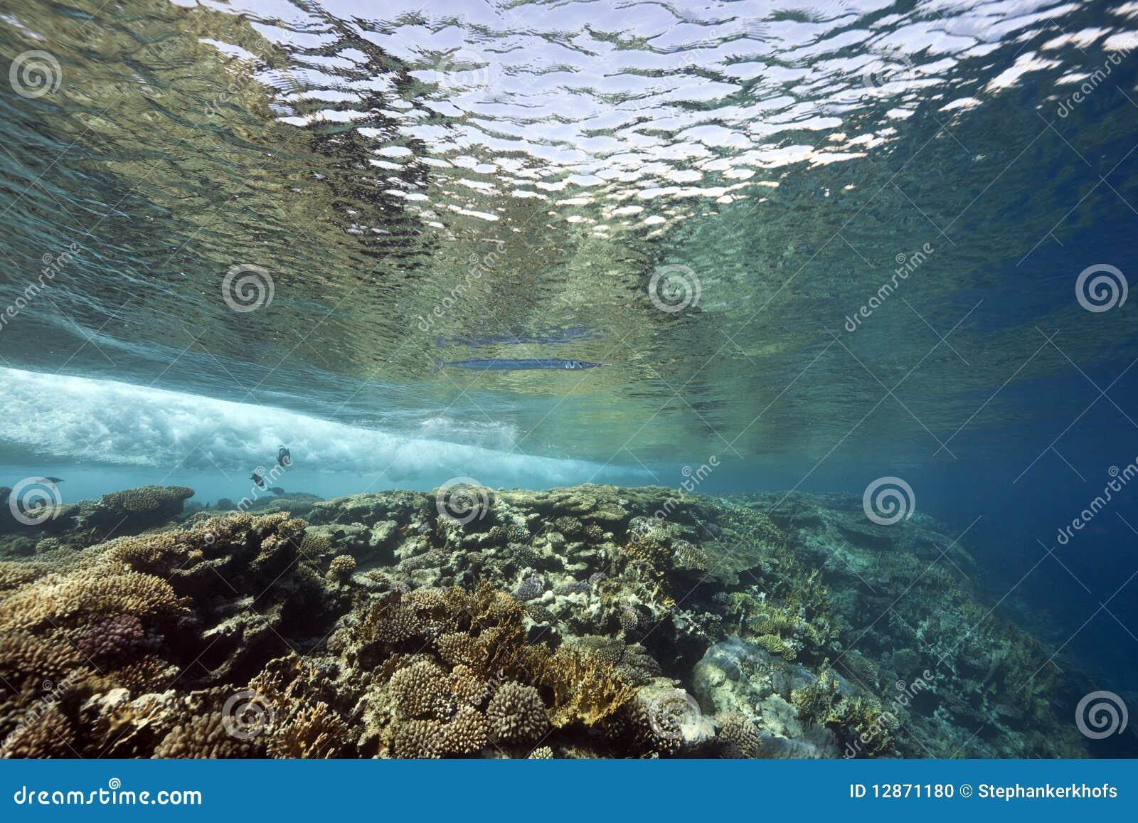 Korallfiskhav