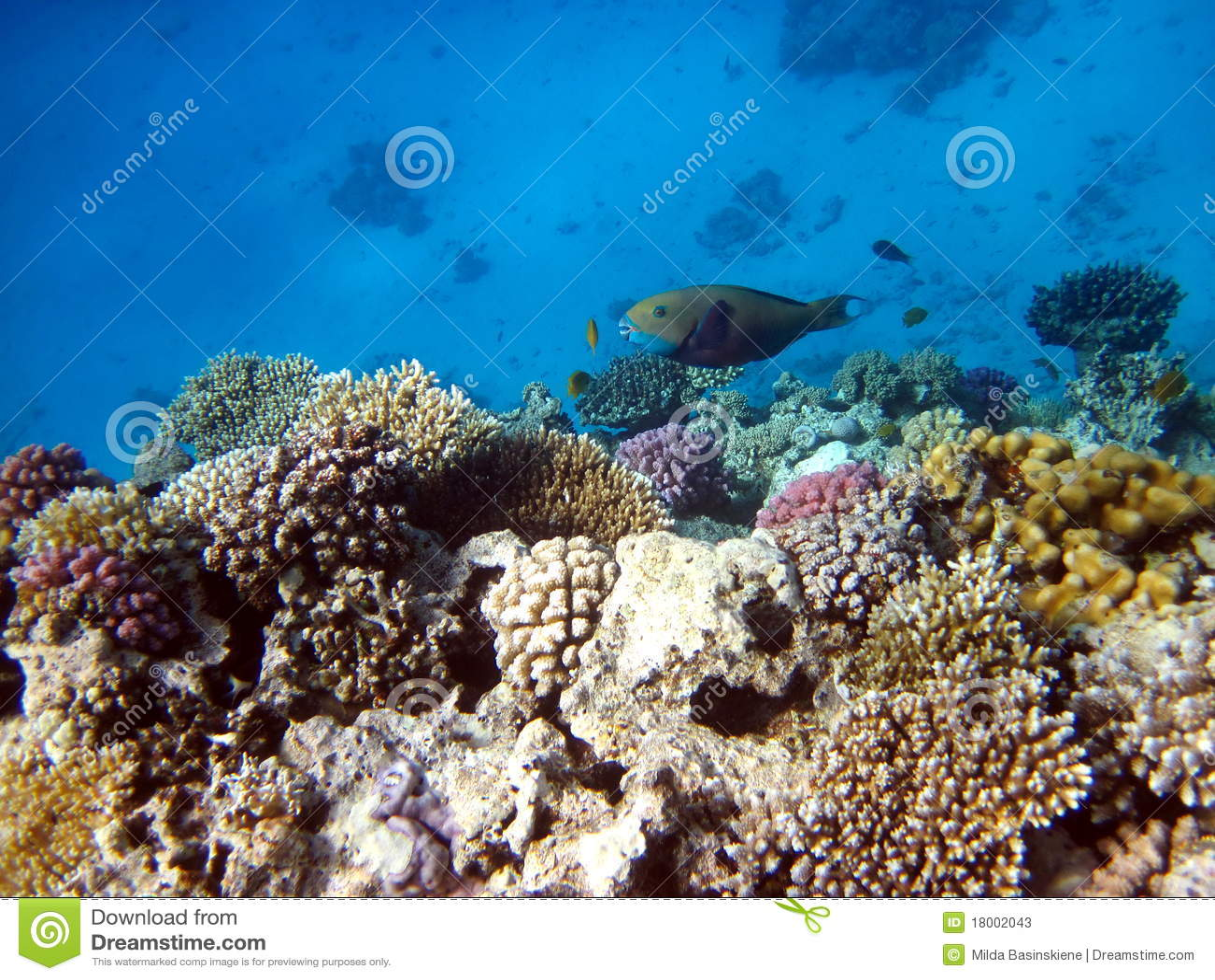 Korallfiskrevar