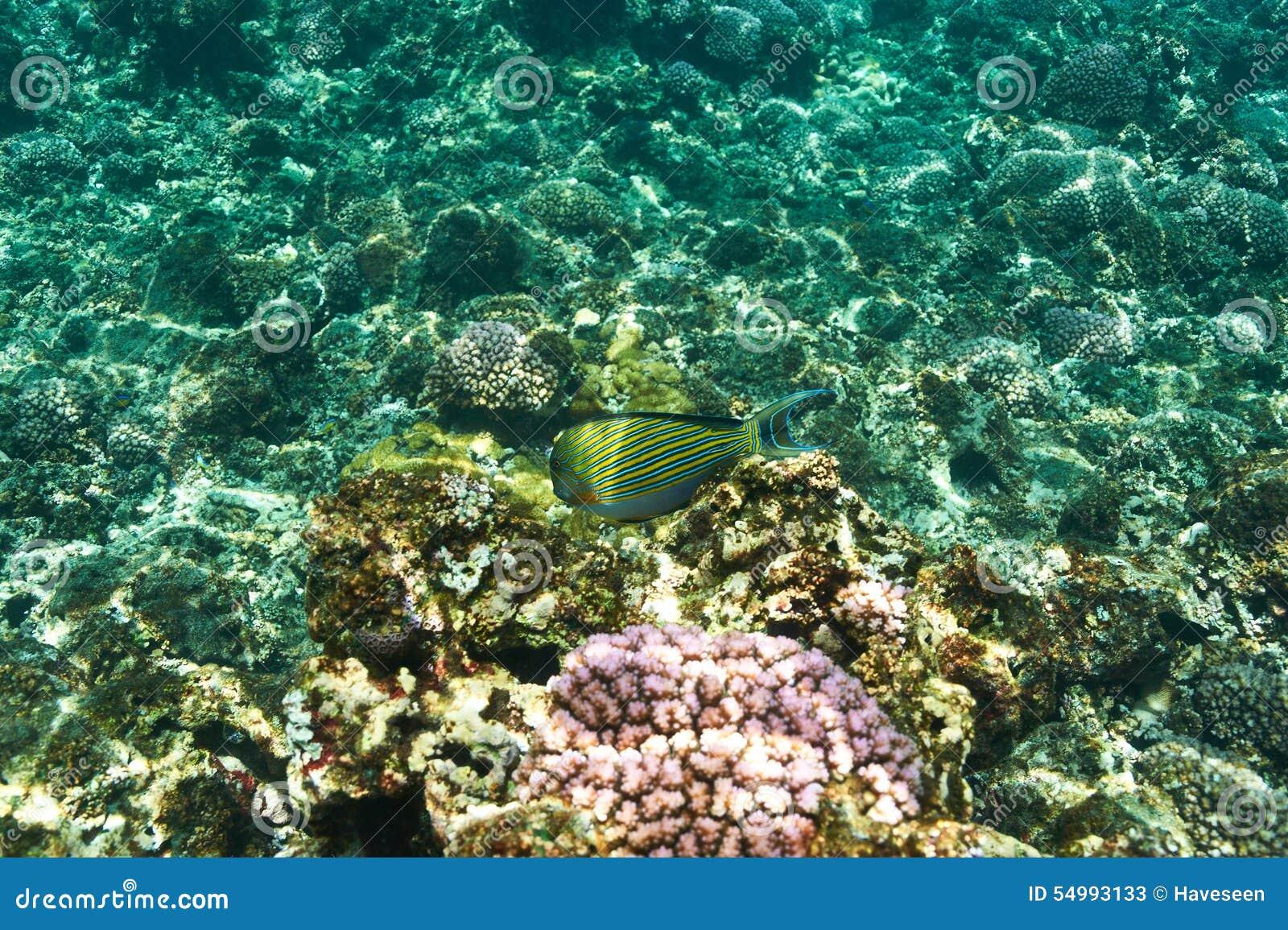 Korallrev och fisk