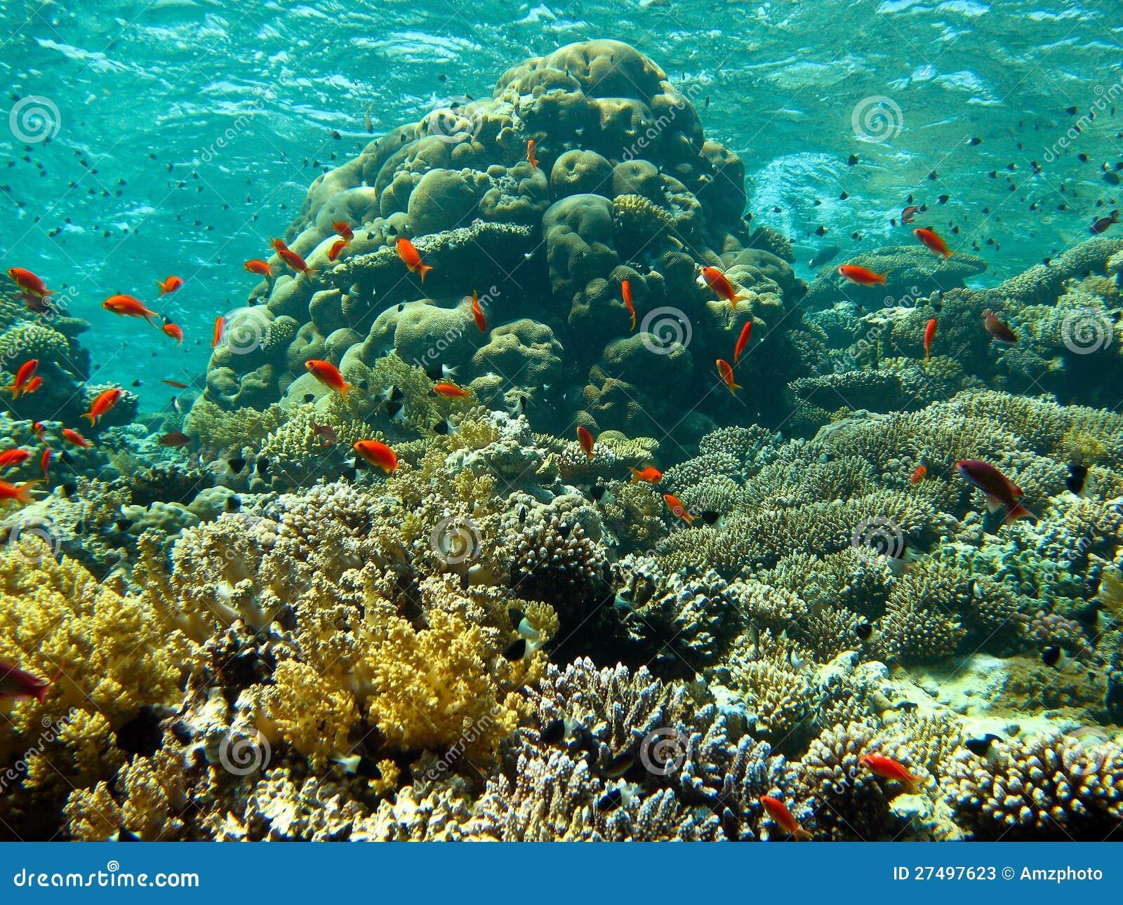 Korallträdgård