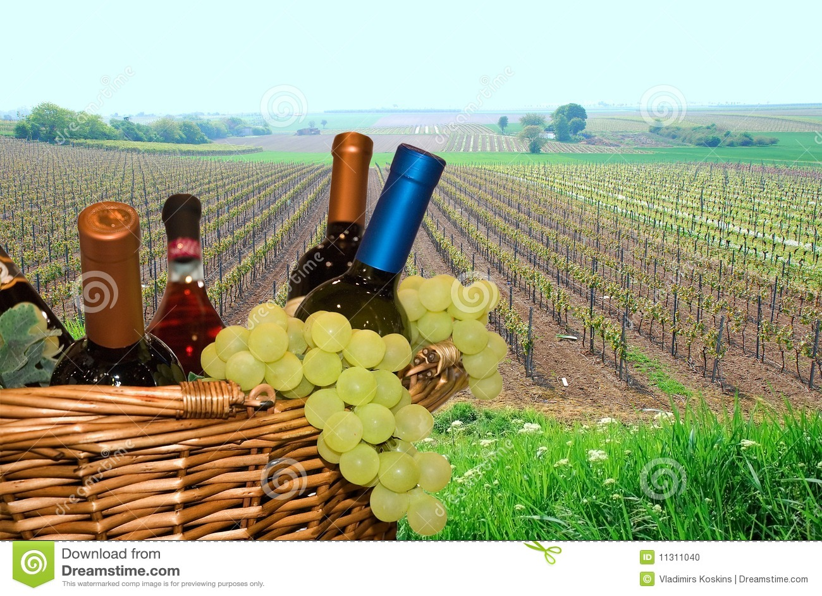 Korb mit Trauben und Wein