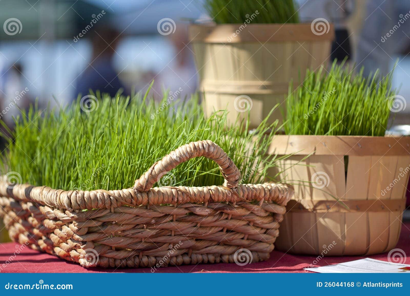 Korgar av Wheatgrass