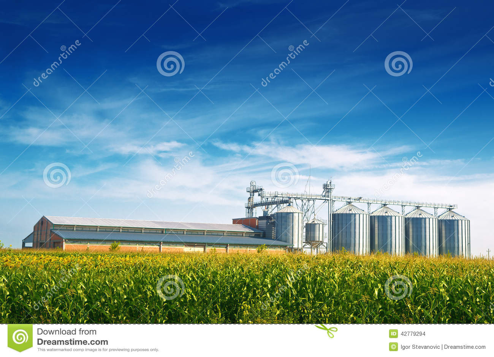 Kornsilor i havrefält