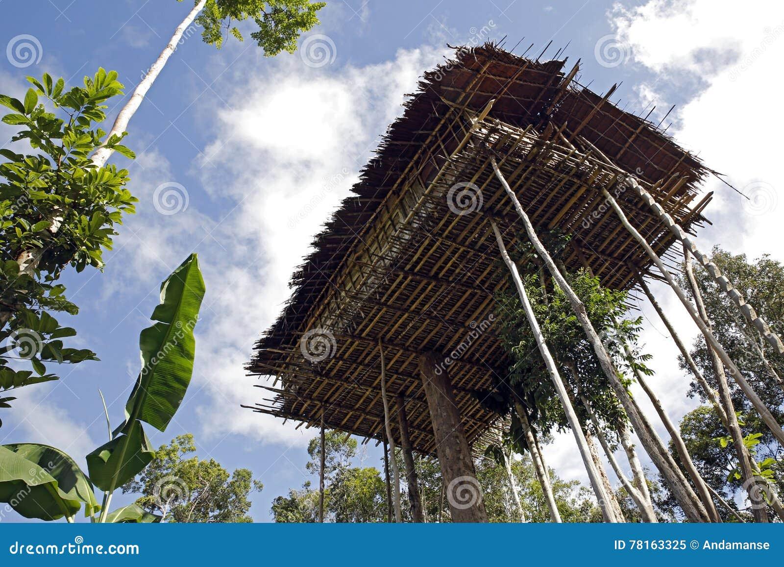 Picture of: Korowai Tree House Stock Image Image Of Lowland Treetop 78163325