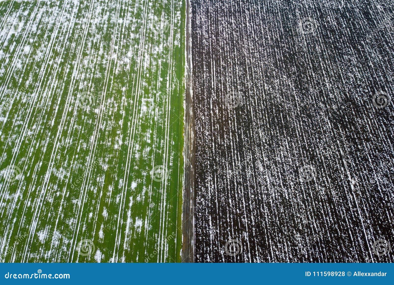Korrelgebied door sneeuw in de lente Luchtmening die wordt behandeld
