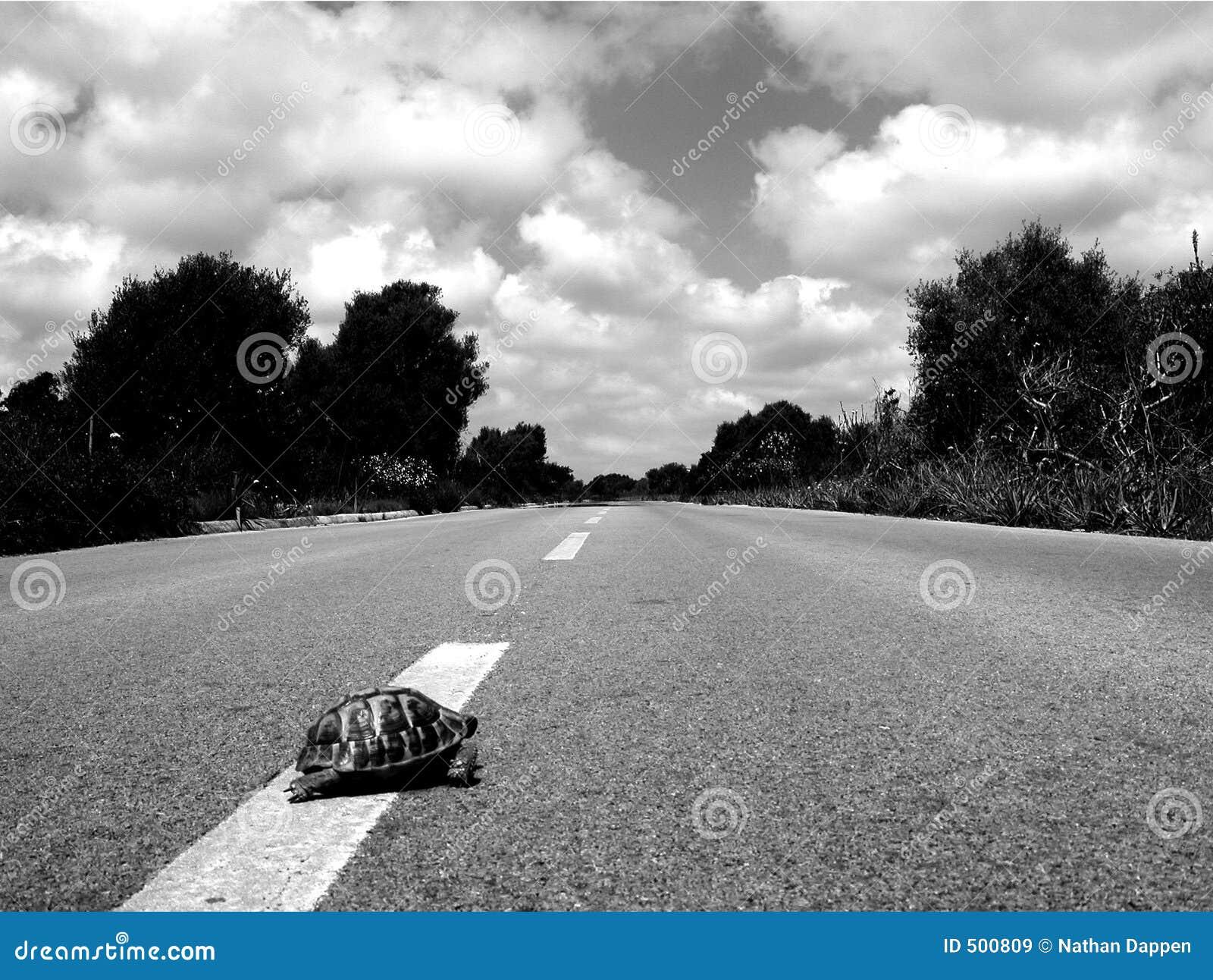 Korset gjorde vägsköldpaddan varför