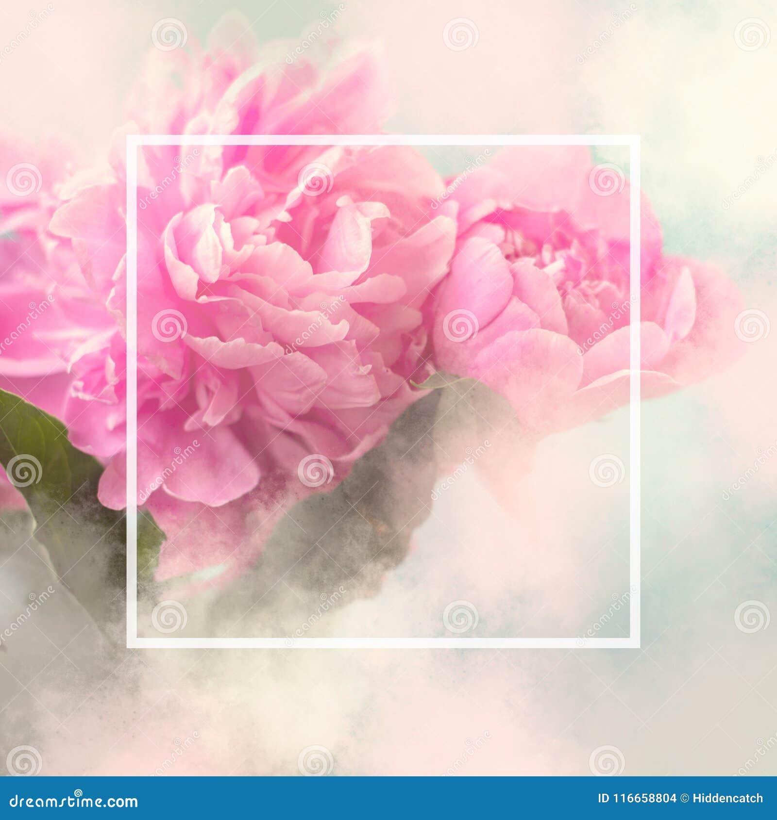 Kort för gåva för rosa pionblommor fyrkantigt med vit ram- och kopieringssp