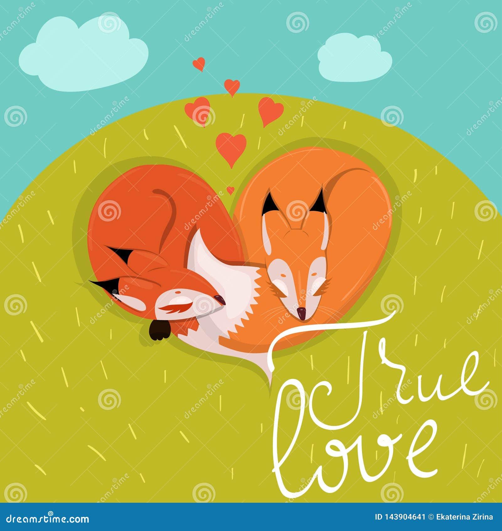 Kort med gulliga förälskade rävar som sover på ängvektorbilden
