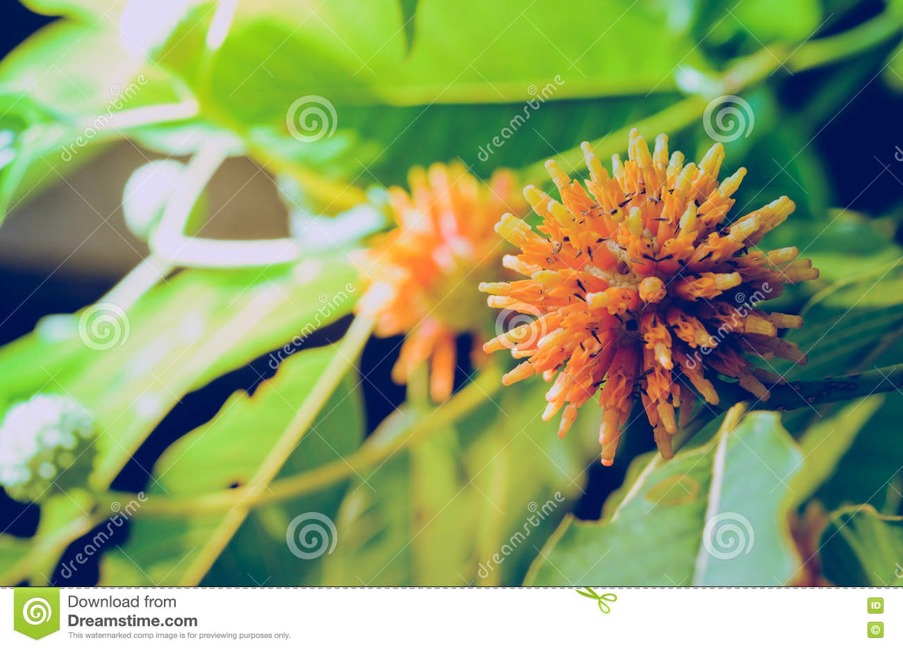 Korth Cottage Flowers That Grow On The Tree`s Natural Growth Obj