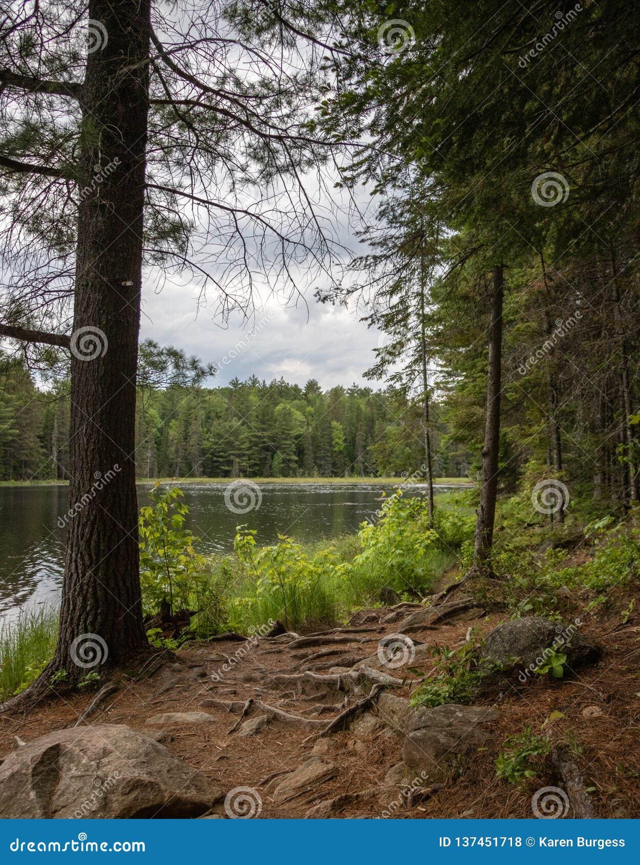 Korzenie na ścieżce jezioro