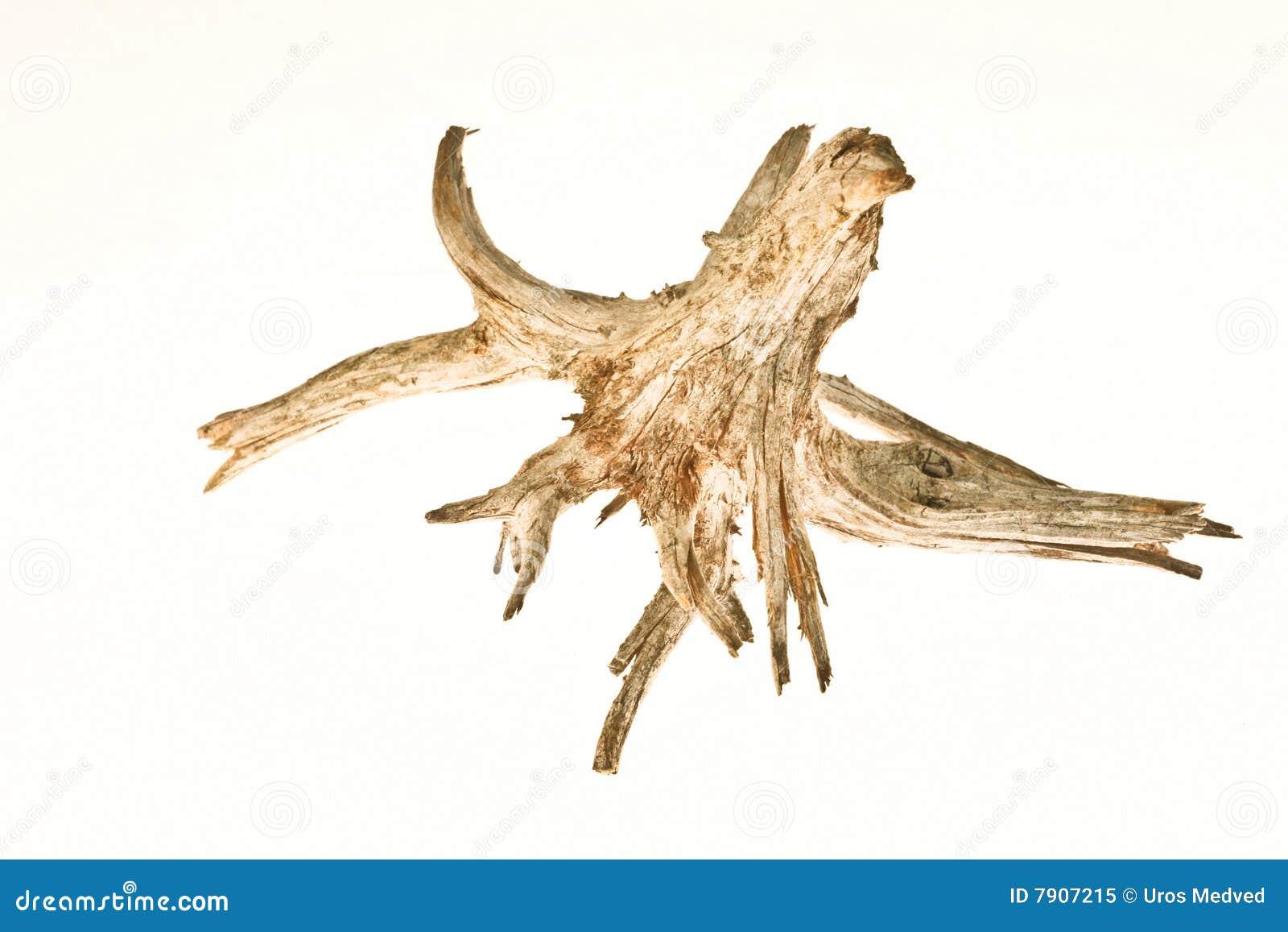 Korzeniowy drewniany