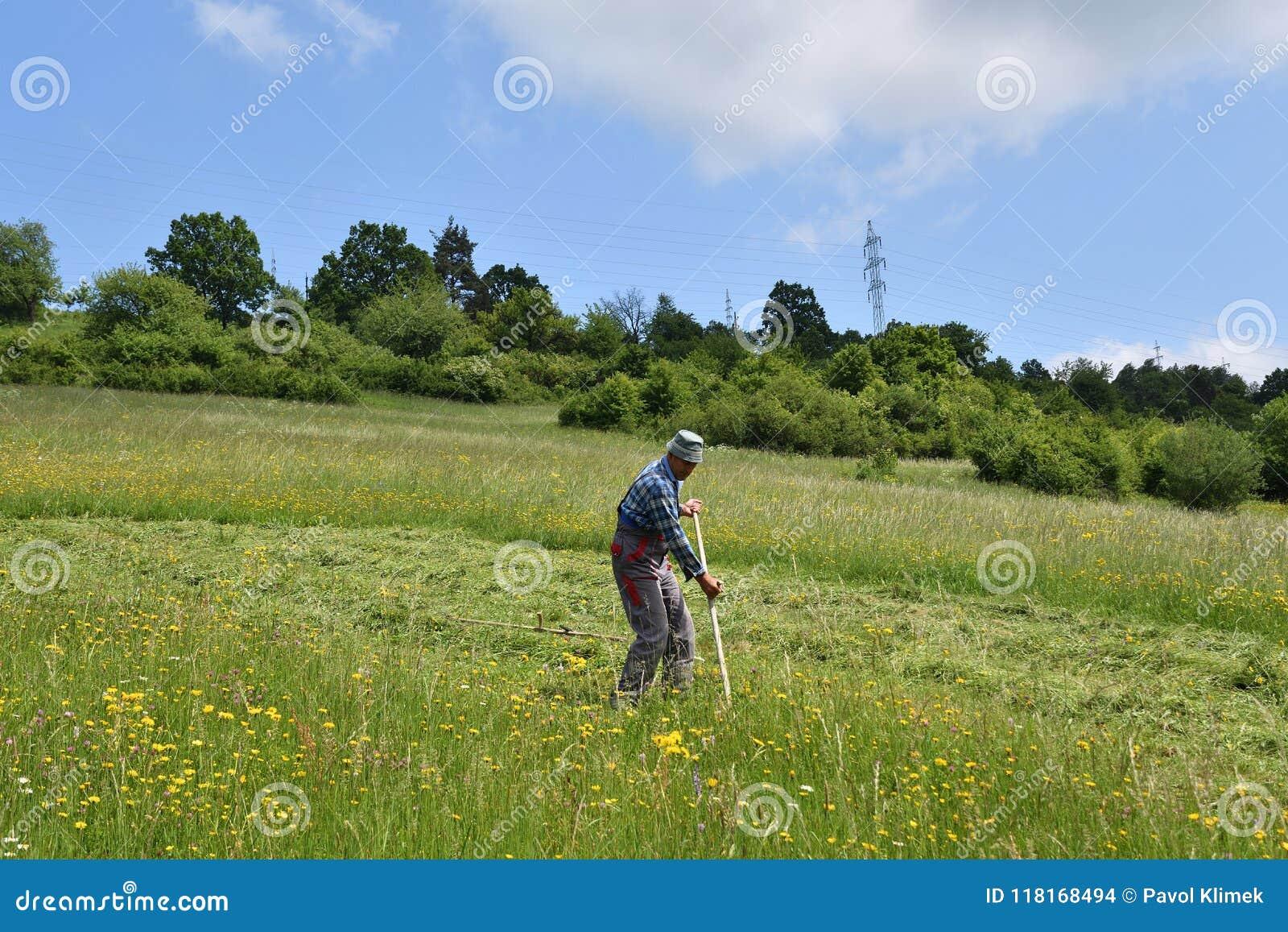 Kosić trawy w wioska tradycyjnym sposobie z kosą
