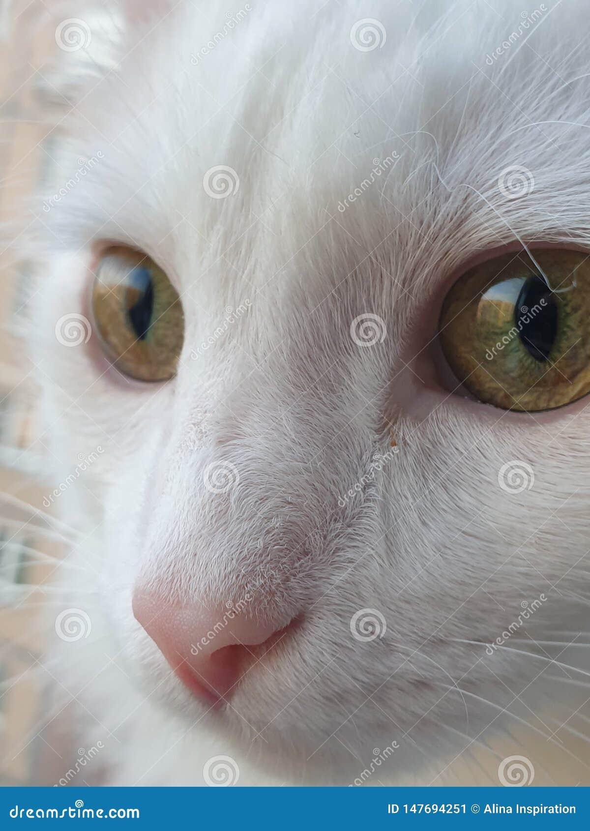 Kosmische Katze mit grünen Augen