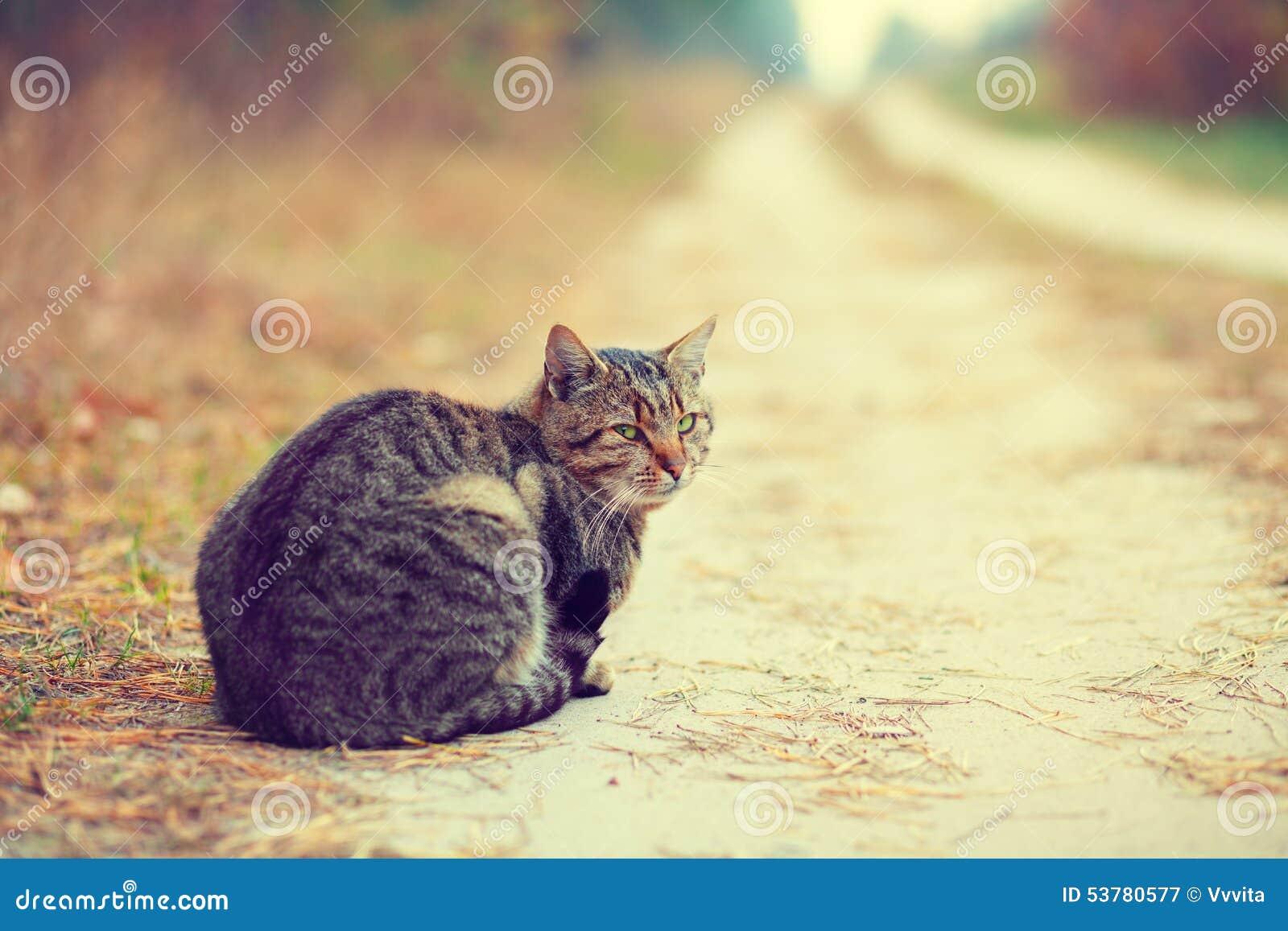 12 kotów kuzia o portret senior y