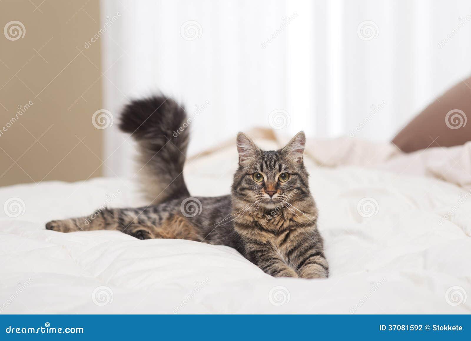 Download Kot zdjęcie stock. Obraz złożonej z kopia, figlarka, pościel - 37081592