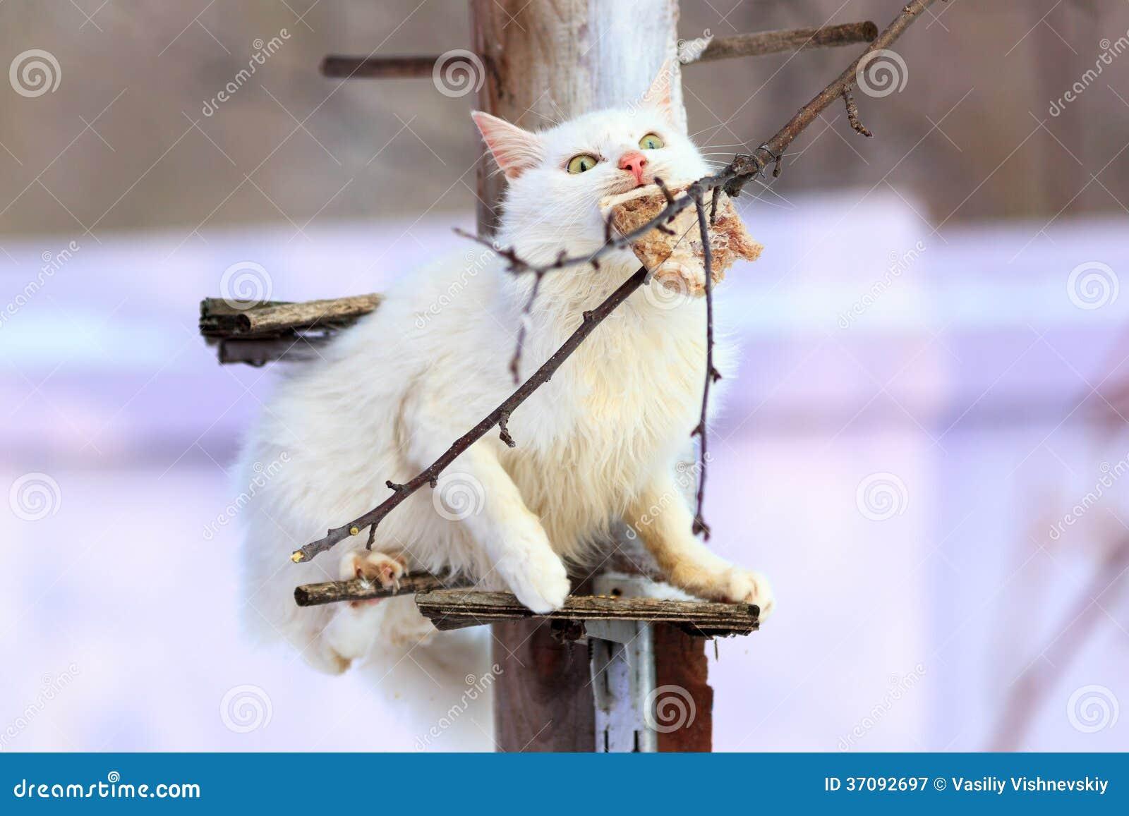 Download Kot. obraz stock. Obraz złożonej z karmienia, synklina - 37092697