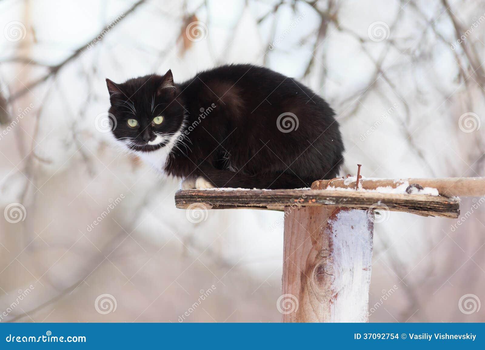 Download Kot. zdjęcie stock. Obraz złożonej z dziecko, ciemniusieńki - 37092754