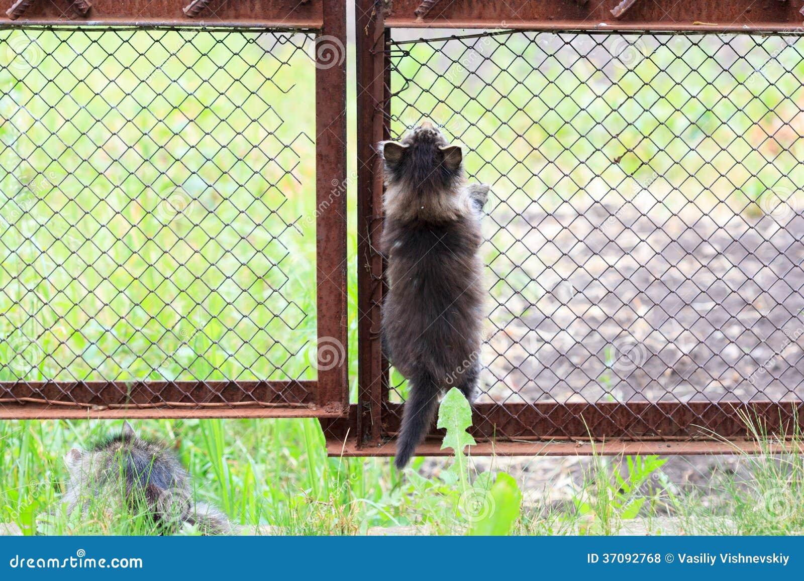 Download Kot. zdjęcie stock. Obraz złożonej z zwierzę, mały, domowy - 37092768