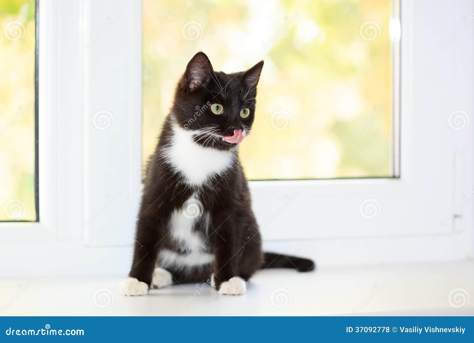 Download Kot. zdjęcie stock. Obraz złożonej z zwierzę, humor, ludo - 37092778