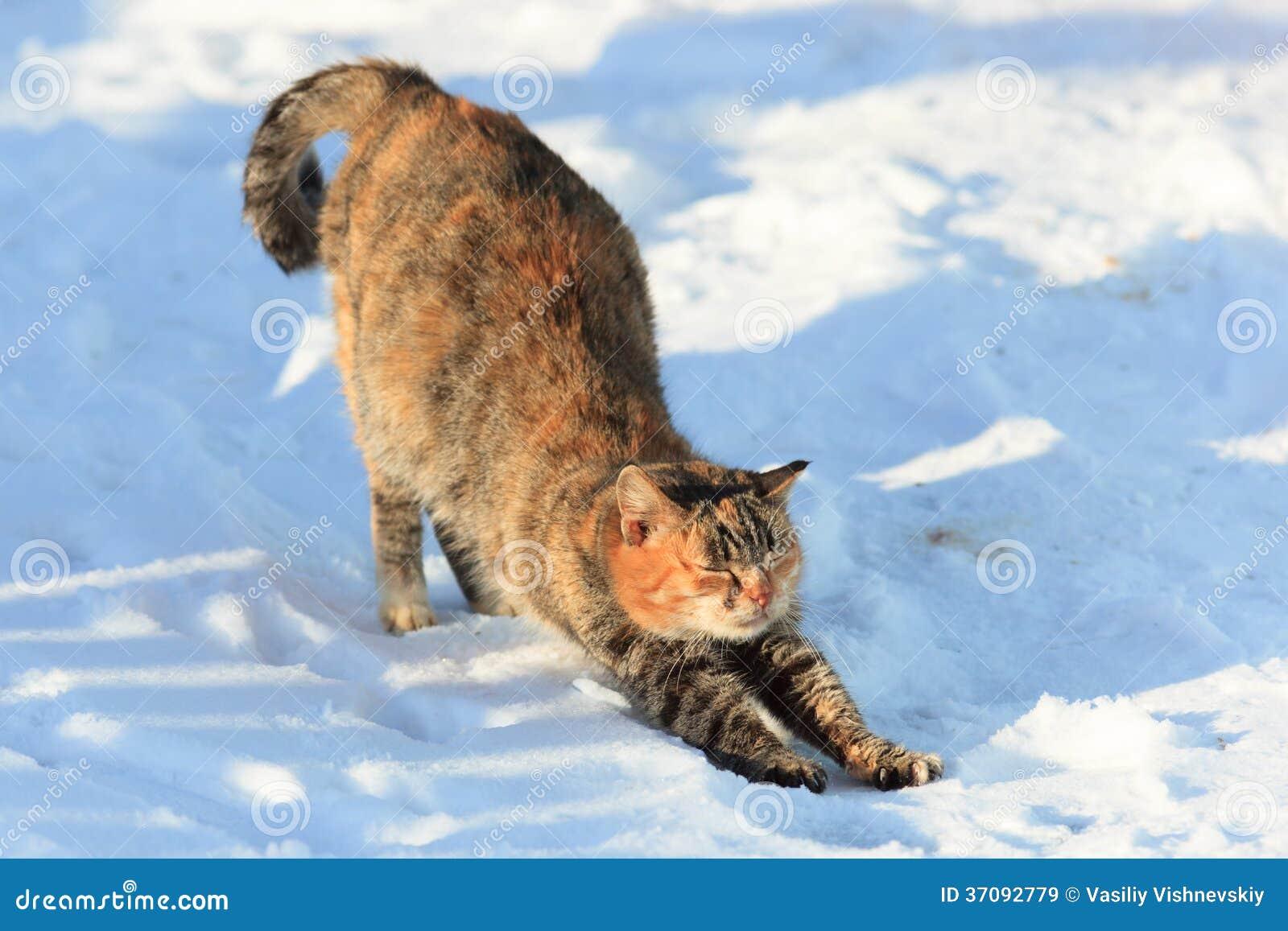 Download Kot. obraz stock. Obraz złożonej z kicia, koci, domowy - 37092779