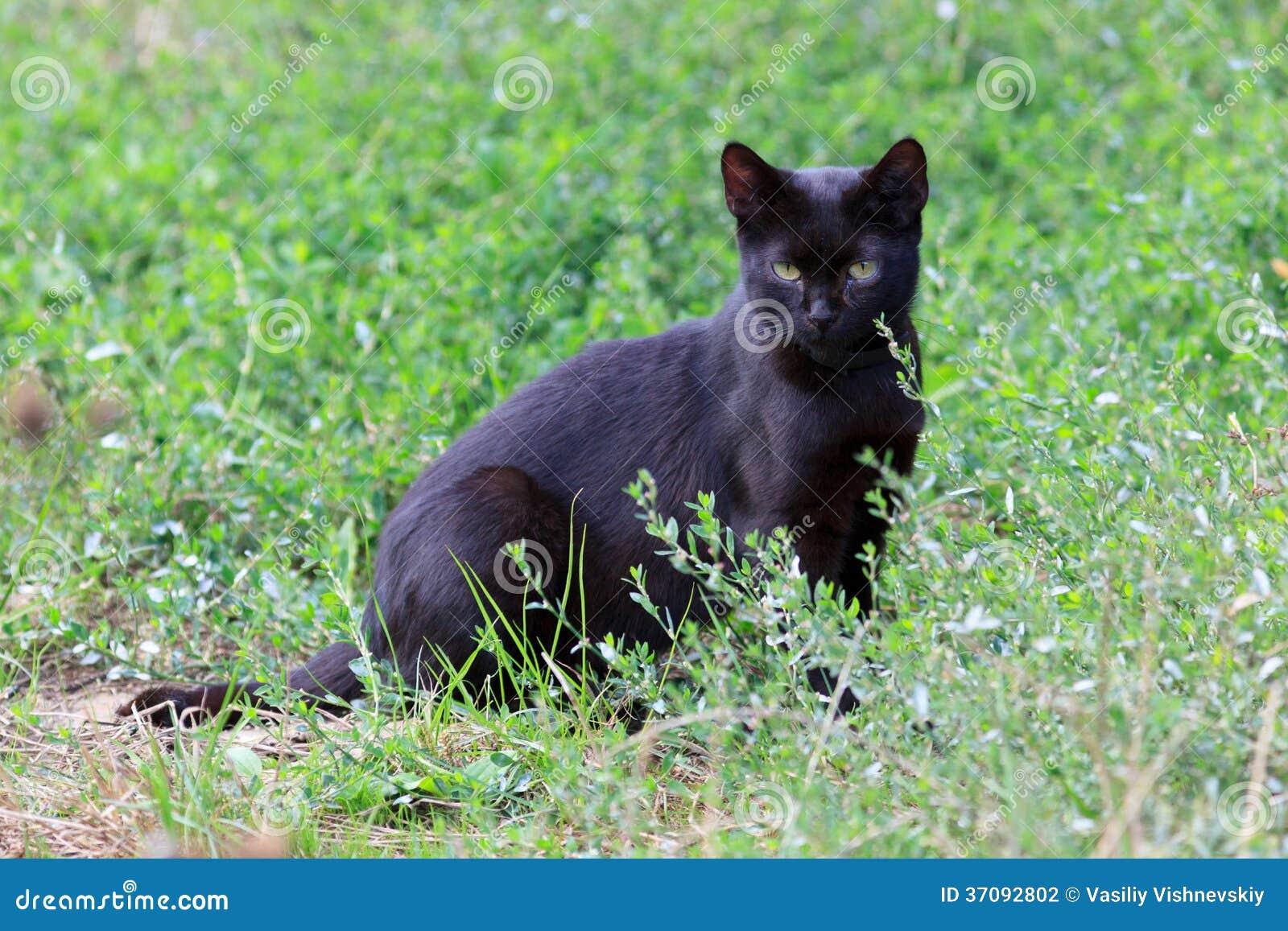 Download Kot. zdjęcie stock. Obraz złożonej z kiciunia, zwierzę - 37092802