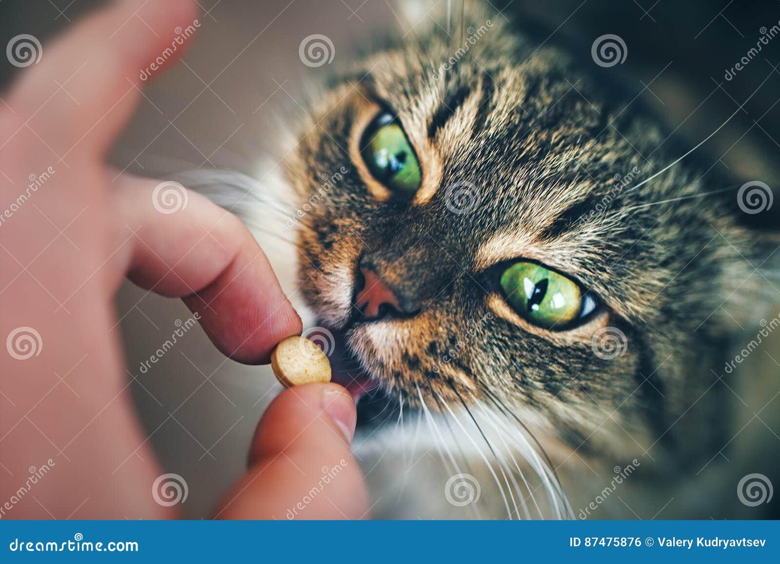 Kot bierze pigułkę