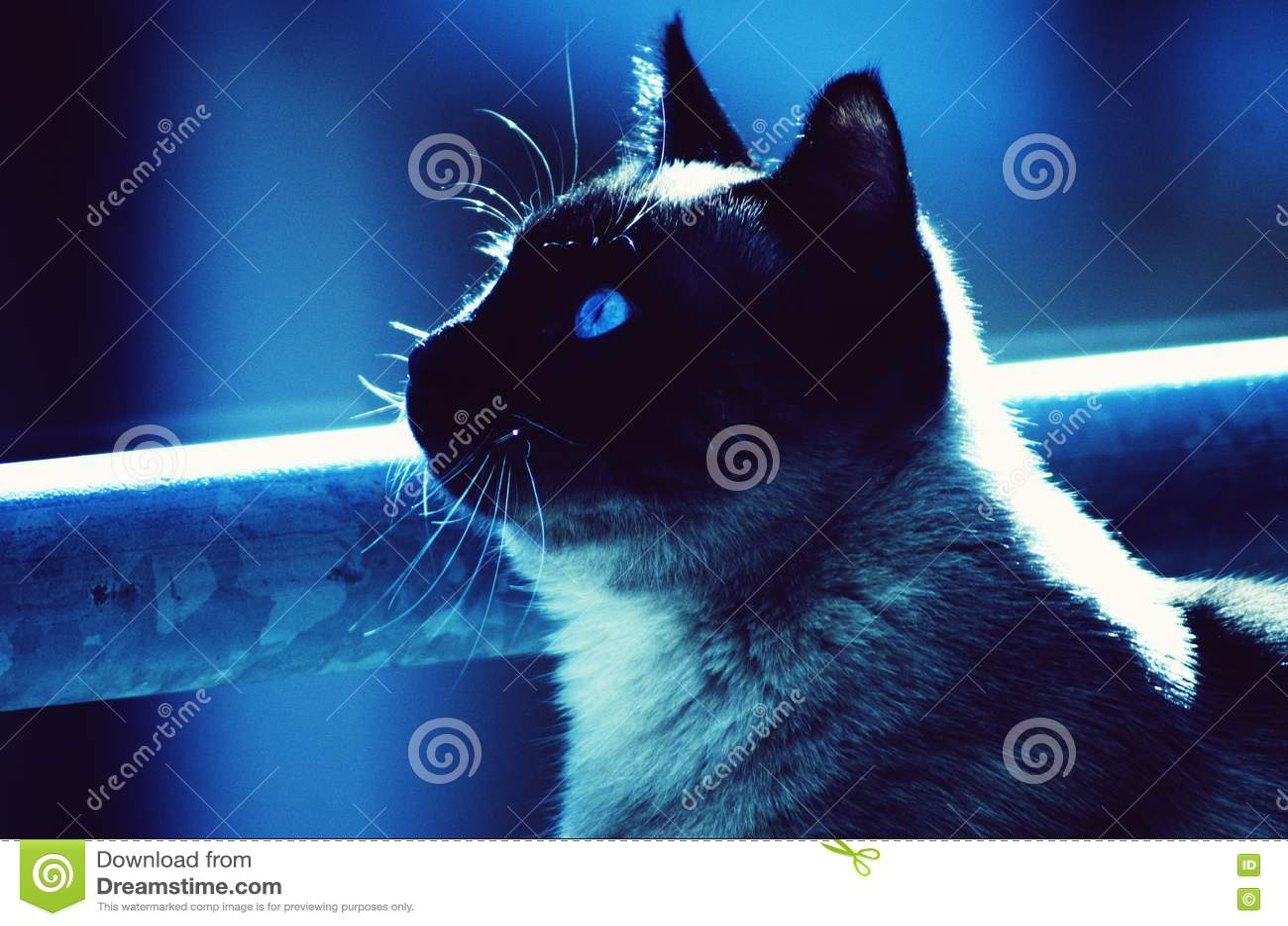 Kot ciekawi widzieć świat