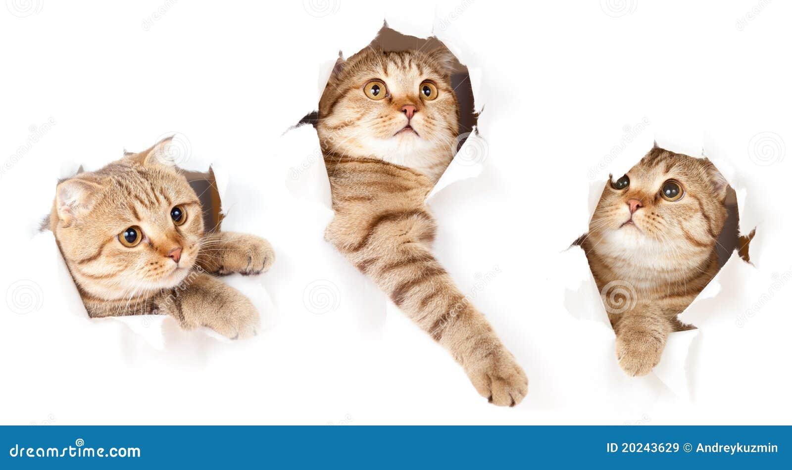 Kot dziura odizolowywał drzejącą set papierową stronę