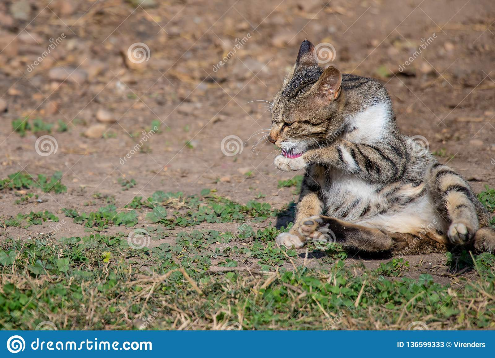 Kot figlarki lying on the beach na zmielonej i czyści frontowej nodze