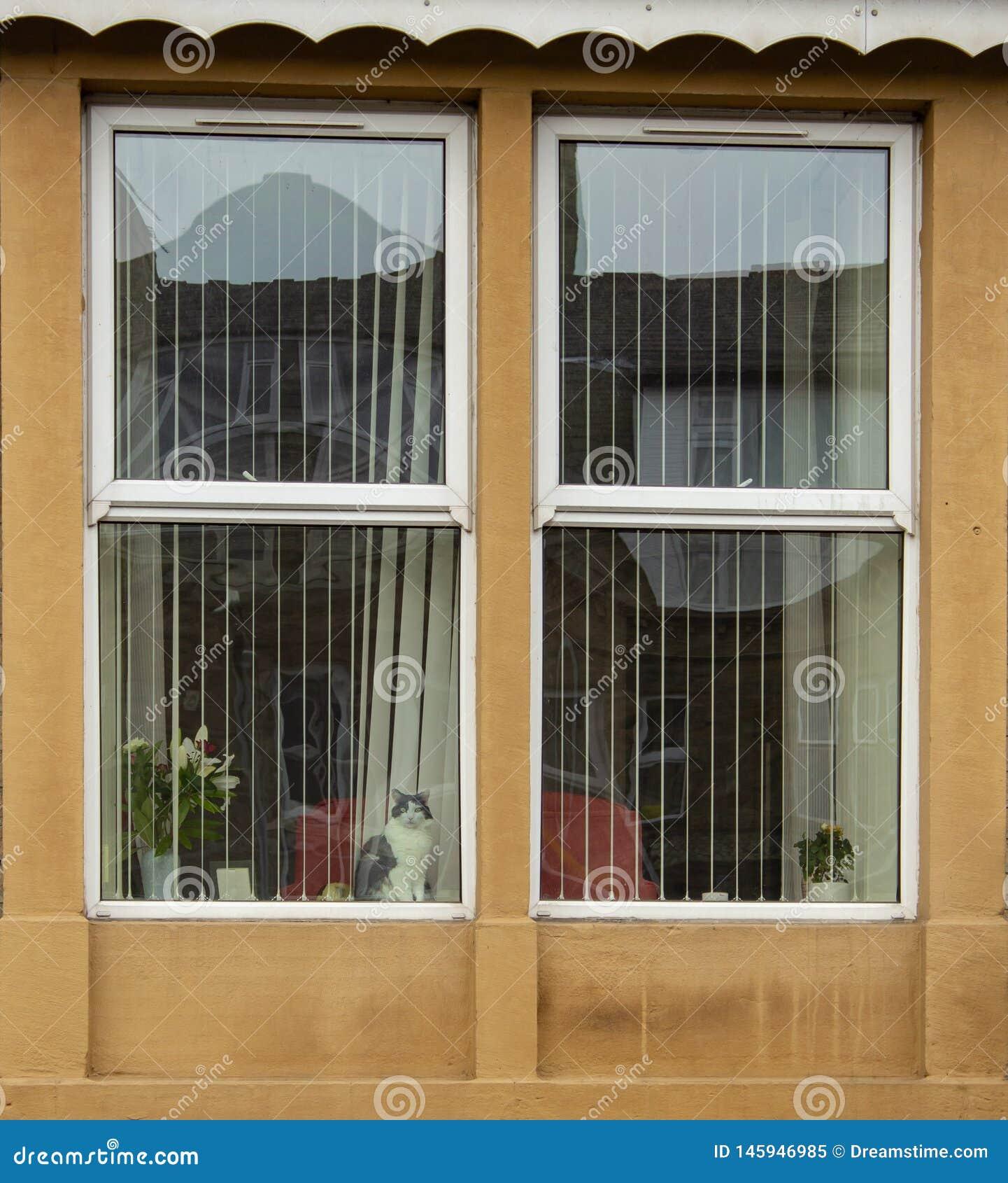 Kot gapi się z okno, ogląda świat iść obok