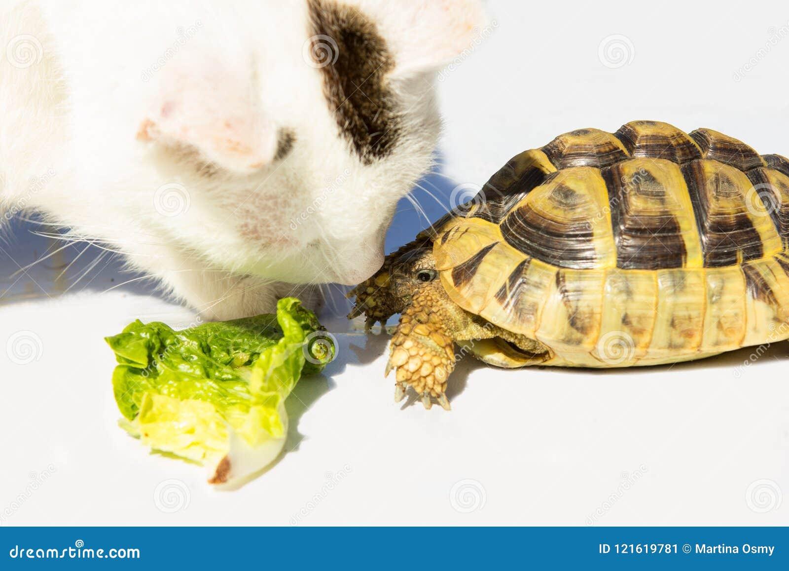 Kot i żółw dostajemy przyjaciół