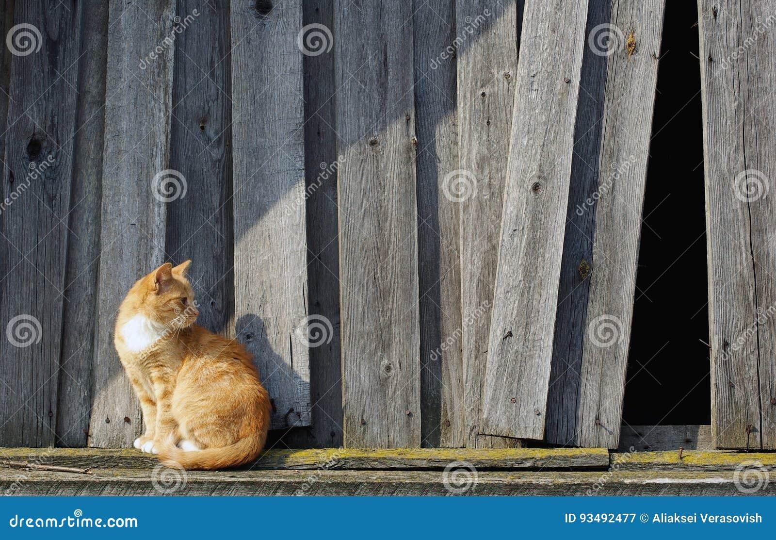 Kot i drewniany ogrodzenie