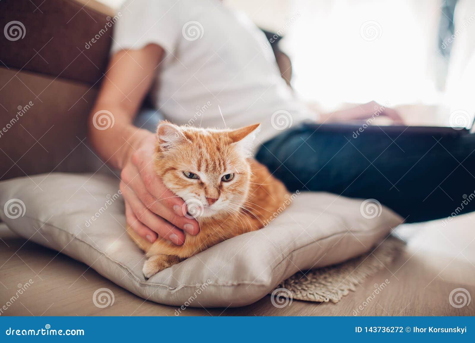 Kot k?ama na poduszce w domu blisko jego mistrza