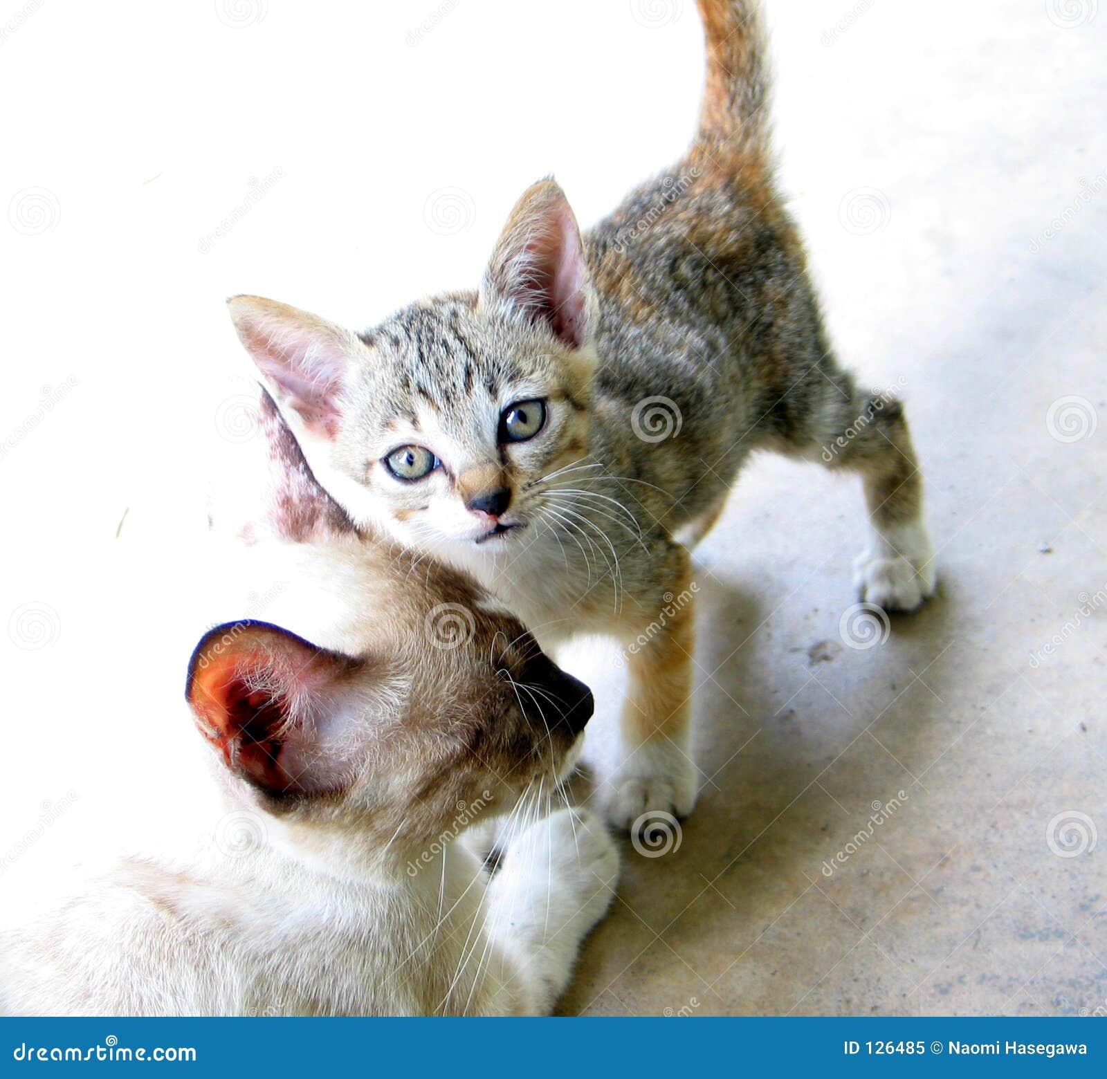 Kot kociaki matka