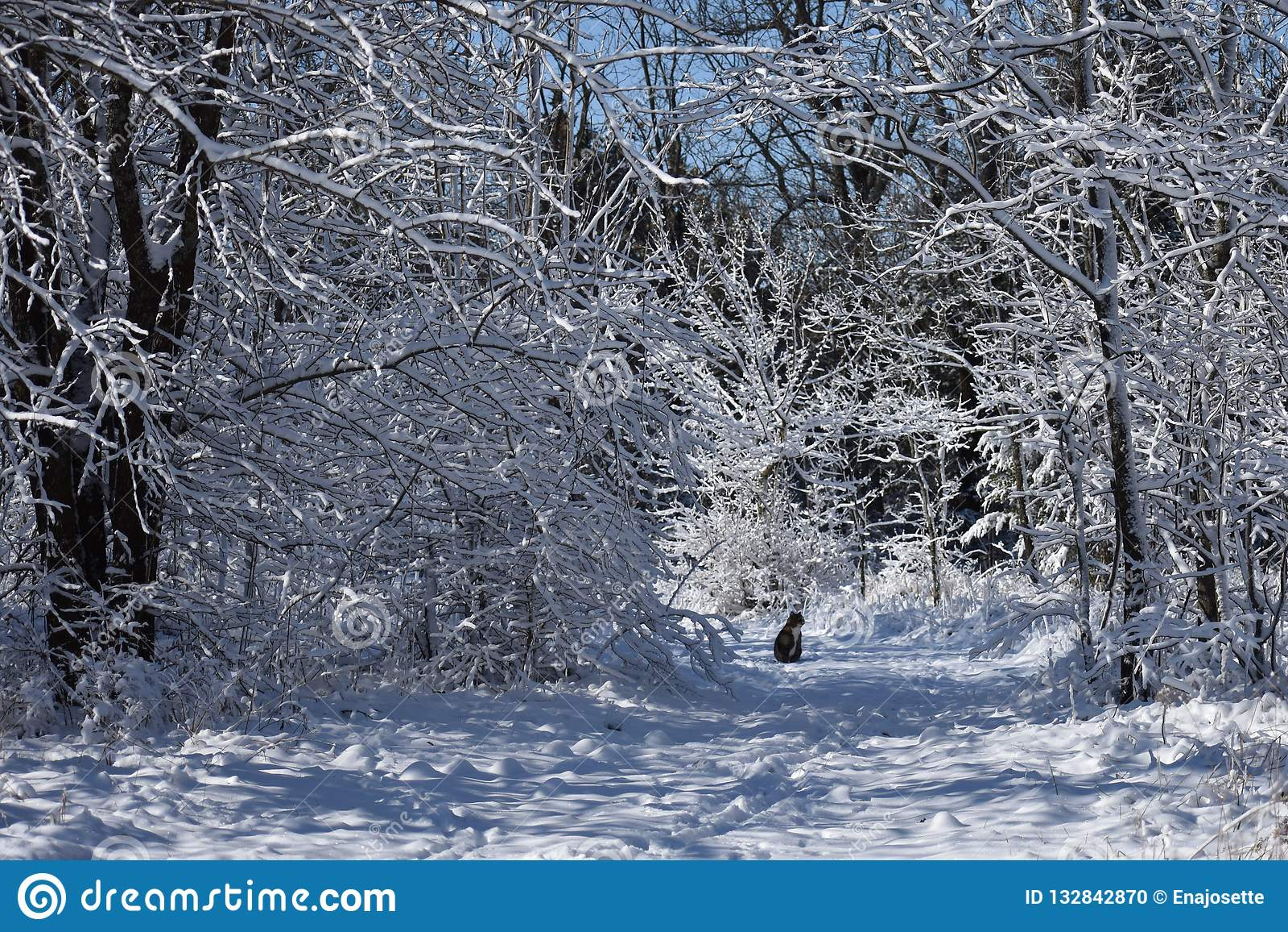 Kot na śnieżnym śladzie
