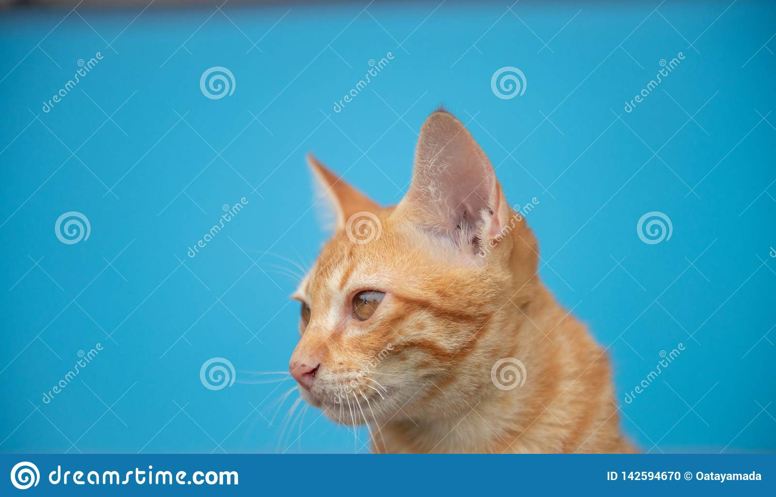 Kot na błękitnym tle