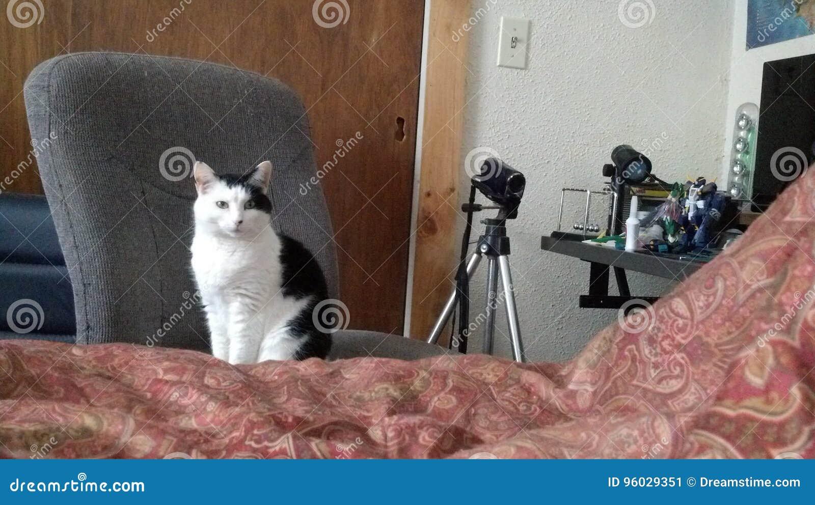 Kot na krześle