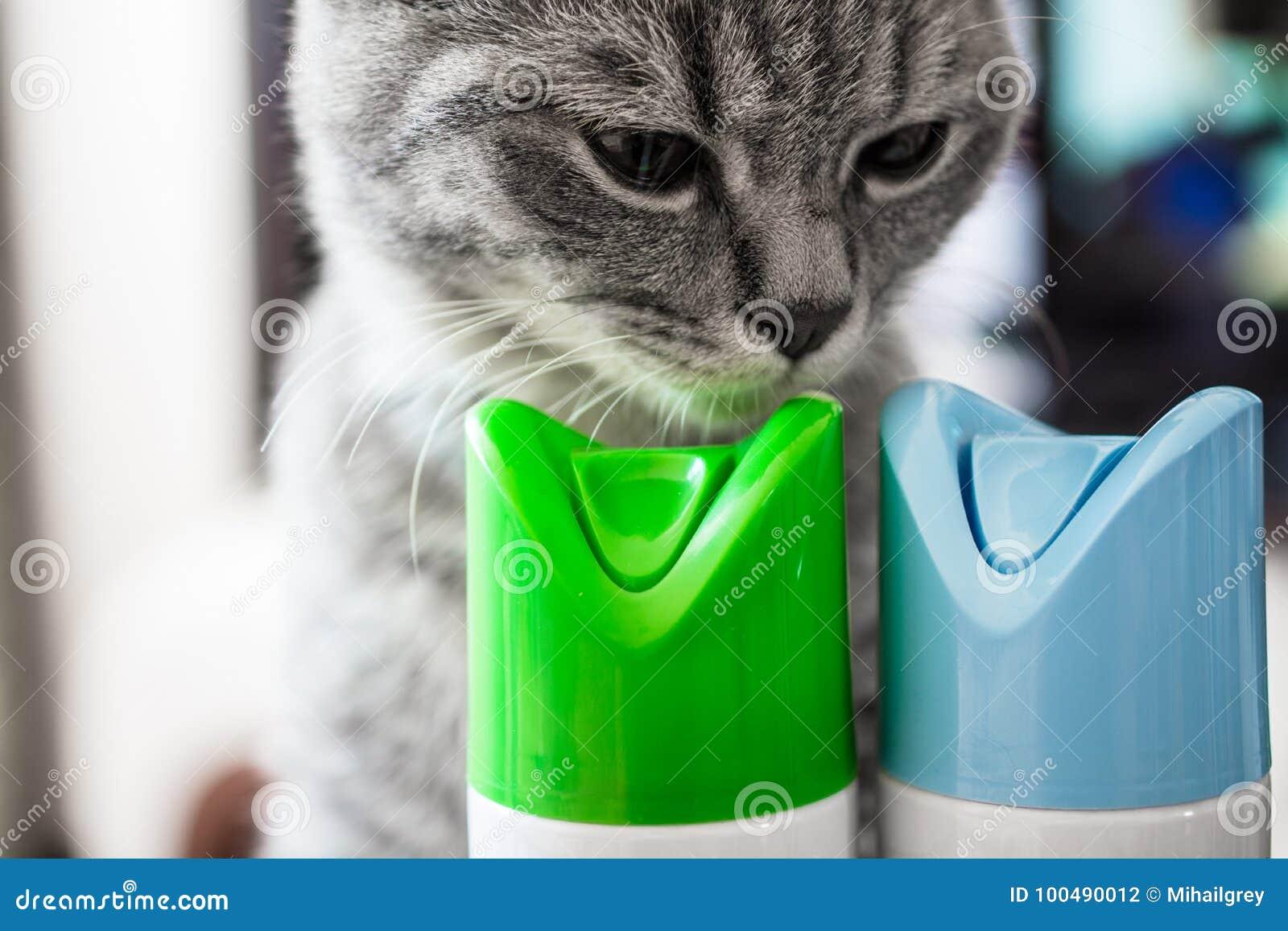 Kot obwąchuje butlę lotniczy freshener