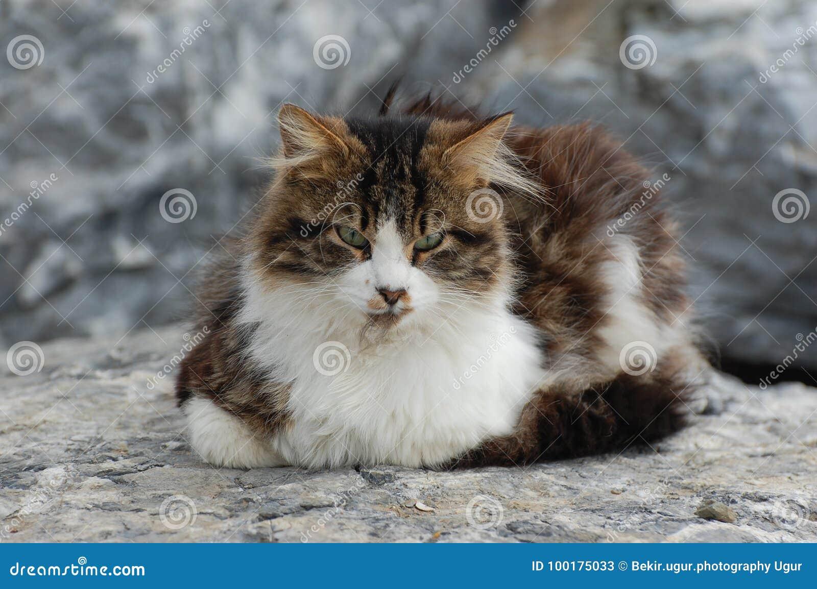 Kot odpoczywa na skale
