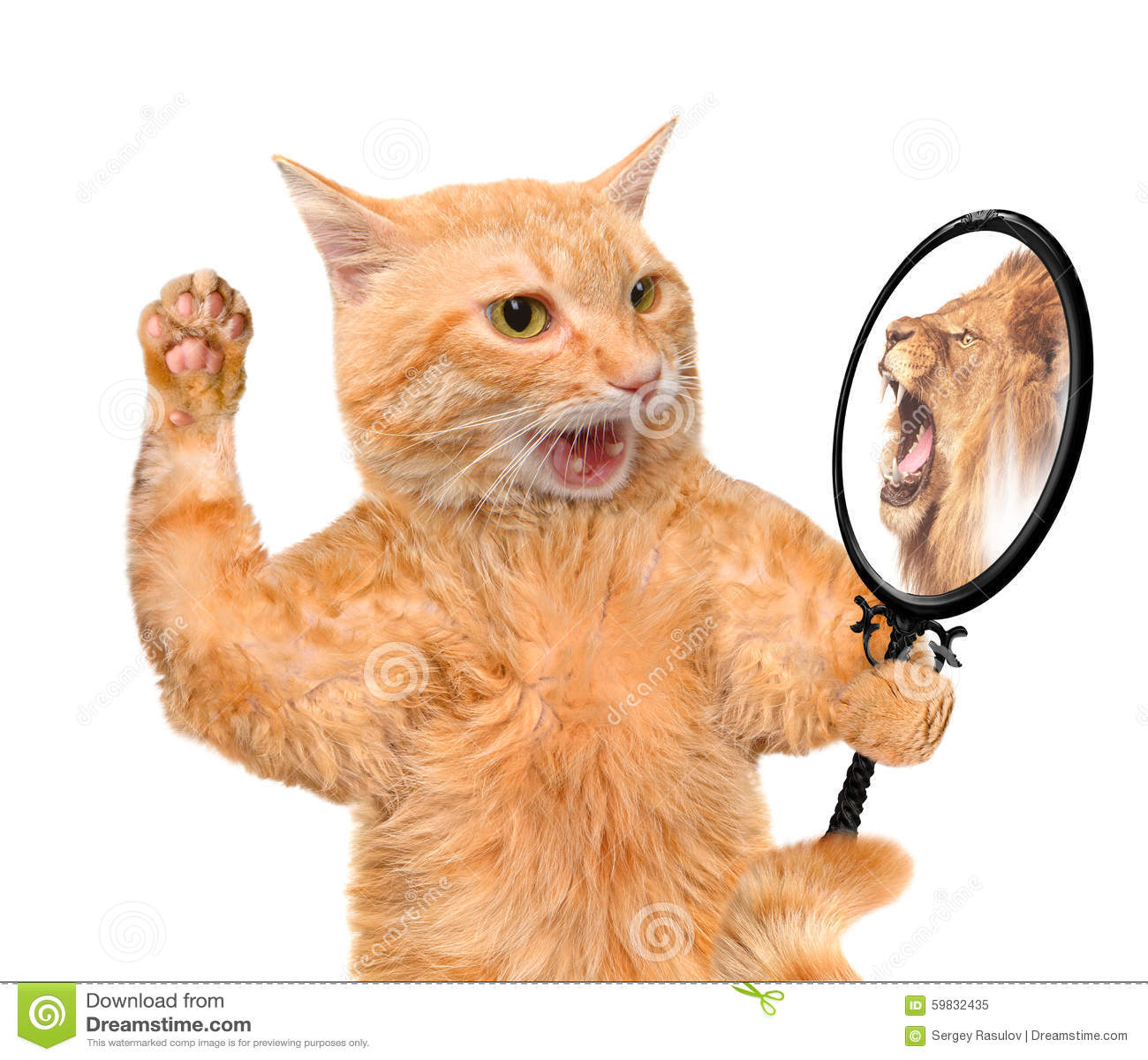 Kot patrzeje w lustro i widzii odbicie lew