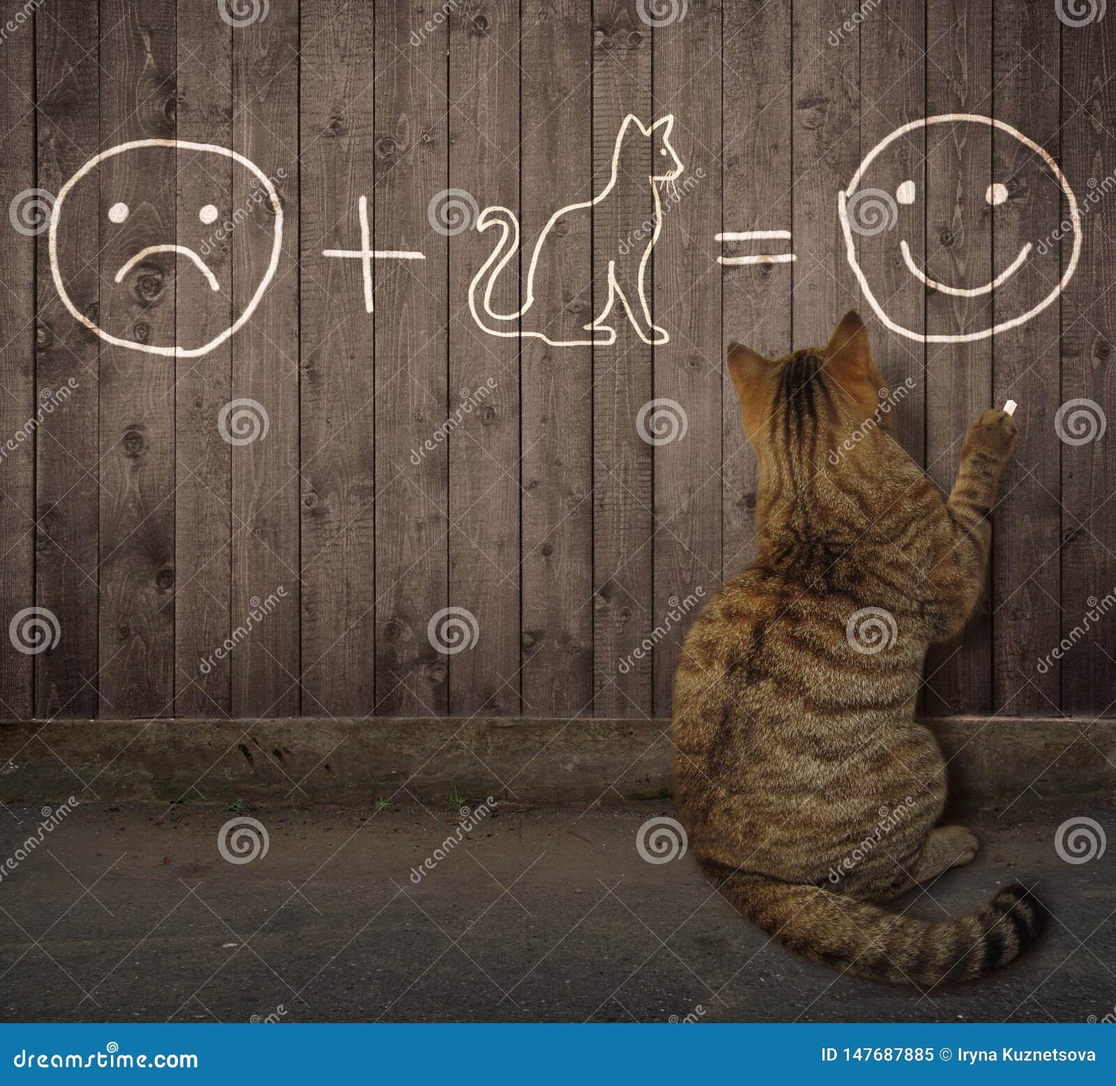 Kot pisze równaniu na ogrodzeniu