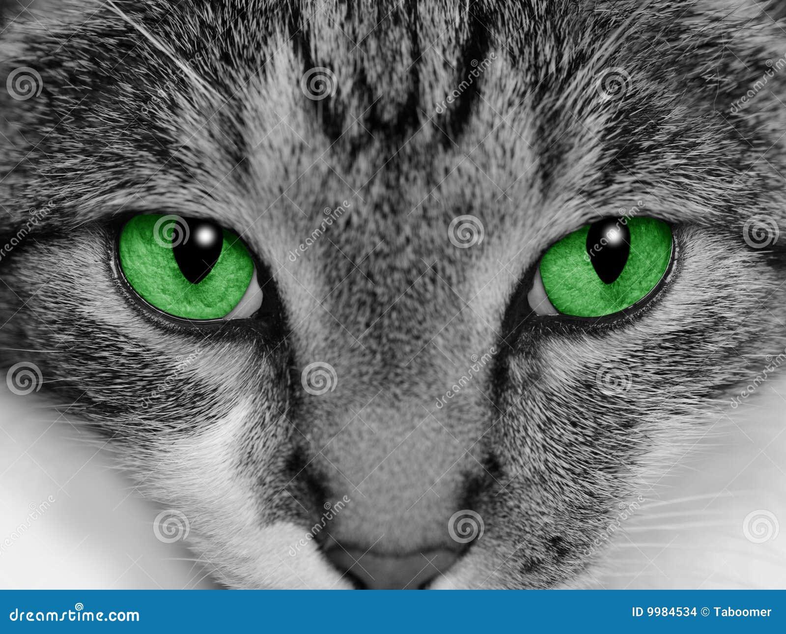 Kot przyglądająca się zieleń