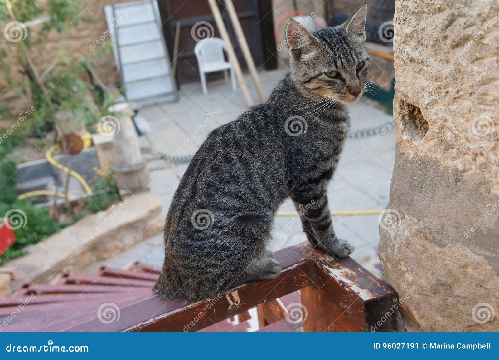 Kot siedzi na dachu
