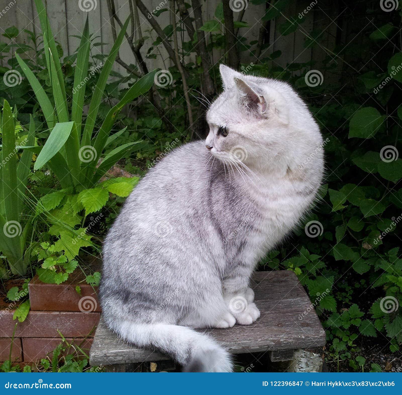 Kot siedzi w starej stolec w jardzie