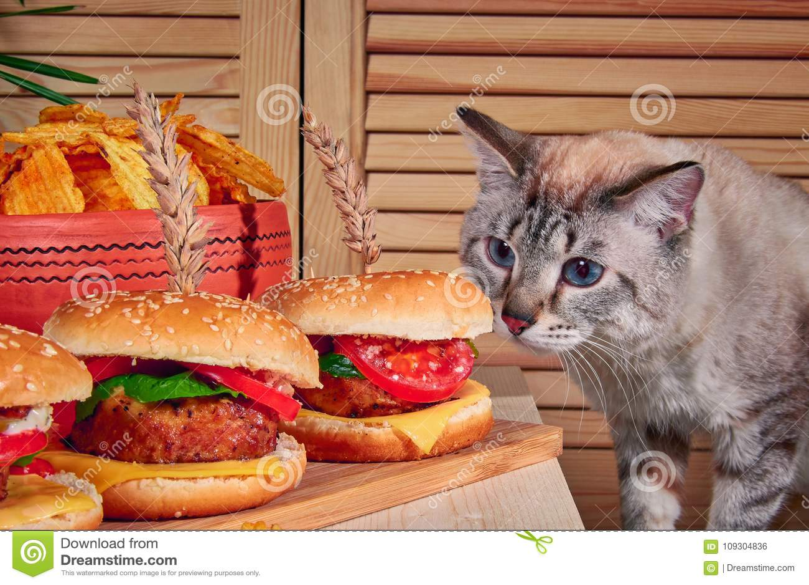 Kot stoi na drewnianej desce w kawiarni obwąchuje hamburgery Kot wspinał się na stole i obwąchiwał hamburgery z mięsem