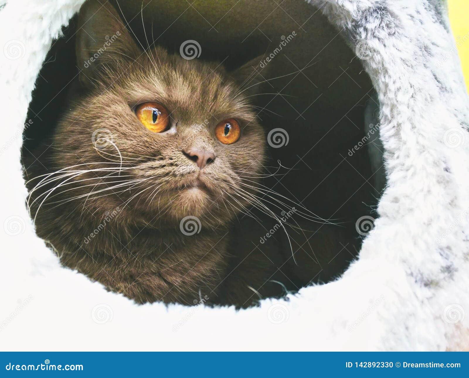 Kot w crabpole