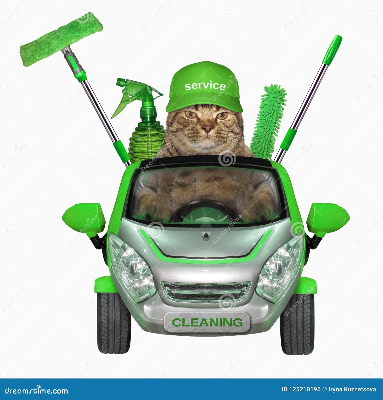 Kot w samochodzie cleaning firma